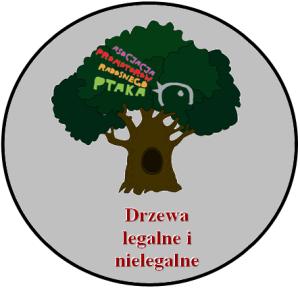 drzewa legalne i nie legalne