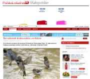 http://polskalokalna.pl/wiadomosci/malopolskie/krakow/news/na-ratunek-krakowskim-wroblom,1850220,3320